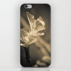 Trace of Spring iPhone & iPod Skin