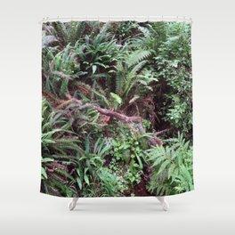 Redwood Rainforest Ferns Shower Curtain