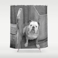 bulldog Shower Curtains featuring Bulldog by Kaleena Kollmeier