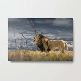 Roaring African Lion Metal Print