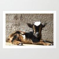 Rocky the Goat Art Print