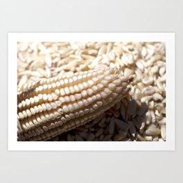 White corn Art Print