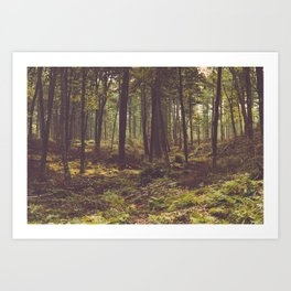 Forest by the Lake Art Print