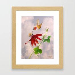 Rufous Hummingbird and Passion Flower Framed Art Print