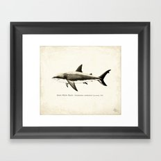 Carcharodon carcharias II ~ Great White Shark Illustration by Amber Marine Framed Art Print