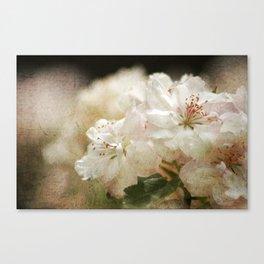 Blossom in Springtime 2 Canvas Print