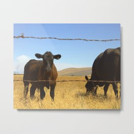 A Little Bull Metal Print