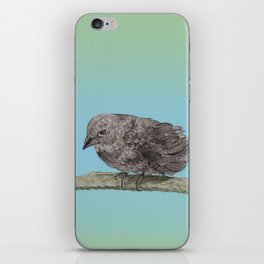 Little bird on a brench iPhone Skin