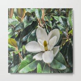 Soft Magnolia Metal Print
