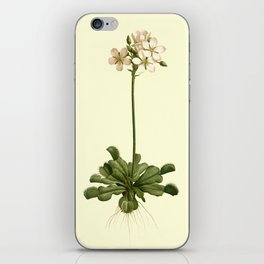 Vintage Venus Fly Trap Illustration  iPhone Skin