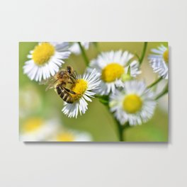 Bee on flower 83 Metal Print