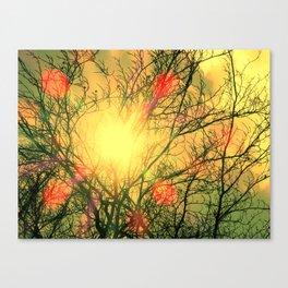 Sunny Beech Canvas Print