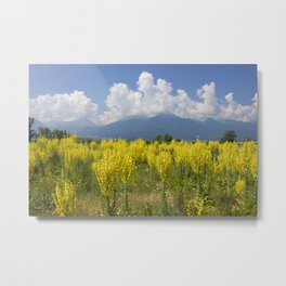 Yellow Field Of Mullein With Pirin Mountains Metal Print