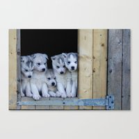puppies Canvas Prints featuring Husky puppies by Nathalie Photos