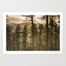 Mountain Forest New Mexico - Nature Photography Art Print