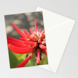 Naked Coral Tree Stationery Cards