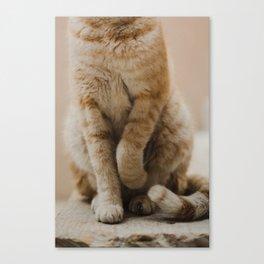 Coquettish Cat in Israel Canvas Print
