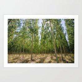 Boardman Oregon Trees Art Print