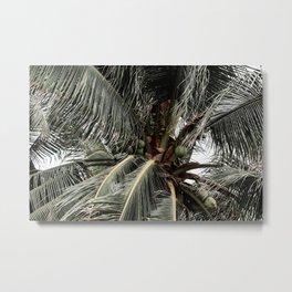 Green Coconuts Metal Print