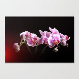 --------- Canvas Print