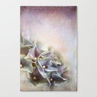 hydrangea Canvas Prints featuring HYDRANGEA by INA FineArt
