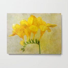 Vintage Yellow Freesia Metal Print