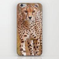 cheetah iPhone & iPod Skins featuring Cheetah by Chris Thaxter