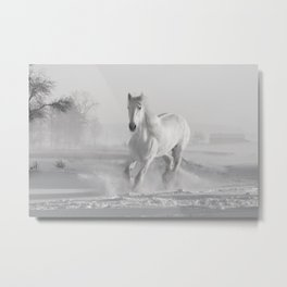 White Thoroughbred Horse Playing in Winter Snow black and white photograph / art photography Metal Print