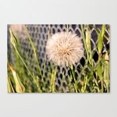 Oversized Puff - Ready to break apart and fly away. Canvas Print