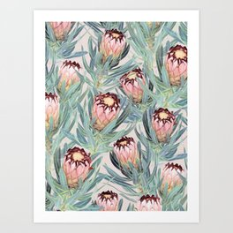 Pale Painted Protea Neriifolia Art Print