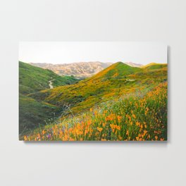 Walker Canyon Super Bloom Metal Print