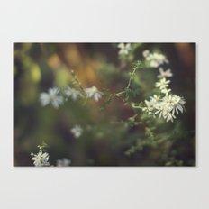 autumn white Canvas Print