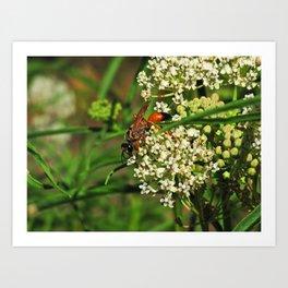 Wasp 1794 Art Print