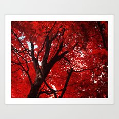Red Canopy Art Print