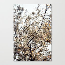 Fading autumn Canvas Print