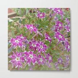 little flower - flor do campo Metal Print