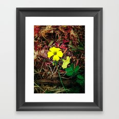 Only when there is sun Framed Art Print