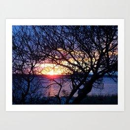 Sunset Through The Plum Bush Art Print
