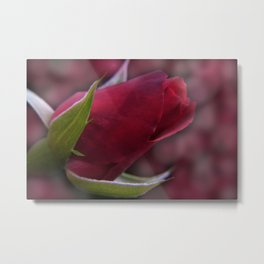the beauty of a summerday -1- Metal Print