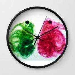 Daphnia Wall Clock