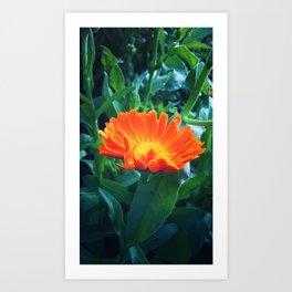 Flower of calendula Art Print