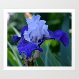 Nature's Blue Art Print