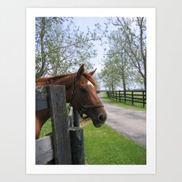 Blood will Tell - From the Bloodlines of Secretariat Art Print