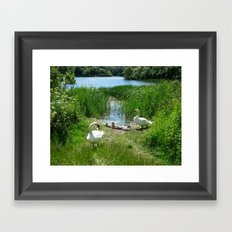Bosherston Lily Ponds.Pembrokeshire.Wales. Framed Art Print