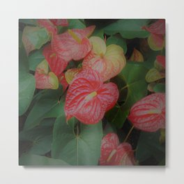 Anthurium (Flamingo Flower) Metal Print