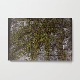old picture succulent Metal Print