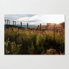 The Beauty of Weeds Canvas Print