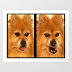 Pomeranian dog (slightly distorted like her personality) lol Art Print