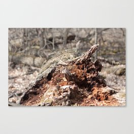 Distraught Earth - Bark Canvas Print