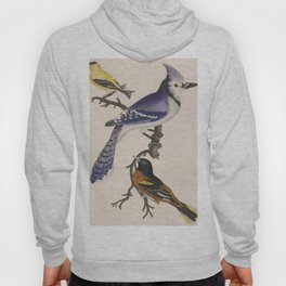Blue jay, goldfinch, and Baltimore oriole - American ornithology - ALexander Wilson - 1829 Hoody